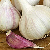 GEORGIAN CRYSTAL GARLIC - culinary bulbs