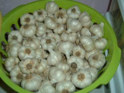 INCHELIUM GARLIC - seed bulbs